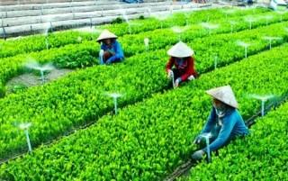 Đến hết năm 2018 cả nước có 13.400 hợp tác xã nông nghiệp