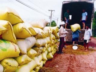 NHNN yêu cầu tập trung cho vay thu mua thóc, gạo vụ Đông Xuân