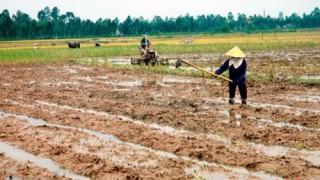 Các tỉnh phía Bắc chủ động ứng phó với thời tiết vụ Đông Xuân