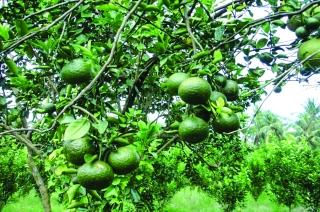 Tiếp vốn kịp thời cho nông dân đầu tư sản xuất