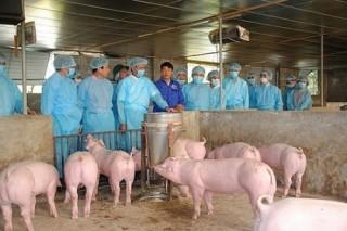 Hà Nội sử dụng nguồn ngân sách dự phòng để chống dịch tả lợn châu Phi