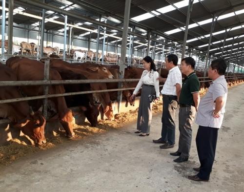 WB hỗ trợ Việt Nam phát triển ngành chăn nuôi và an toàn thực phẩm