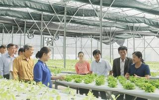 Chiến lược phát triển kinh tế tập thể: Thu hút nông dân, hộ kinh tế cá thể và nhiều tổ chức tham gia