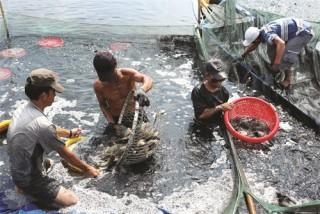 Hậu Giang cho vay lĩnh vực thủy sản đạt dư nợ 3.125 tỷ đồng