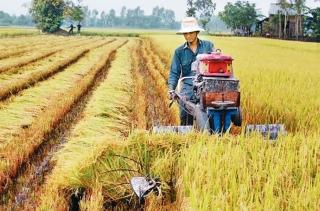 Hà Nội: 382 xã đạt, cơ bản đạt tiêu chí tổ chức sản xuất trong xây dựng nông thôn mới