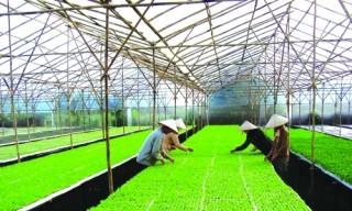 Tháo gỡ cấp giấy chứng nhận tài sản hình thành trên đất nông nghiệp
