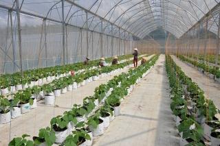 Chuyển đổi số nông nghiệp: Cần sự tiên phong của doanh nghiệp lớn