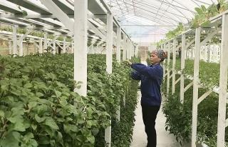 Đến năm 2025, diện tích nhóm đất nông nghiệp sản xuất hữu cơ đạt khoảng 1,5 - 2%