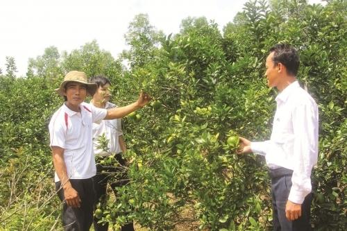 Hà Tĩnh: Cho vay tam nông chiếm gần 49% tổng dư nợ