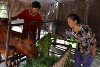 Hộ cận nghèo sẽ được hỗ trợ 90% phí bảo hiểm nông nghiệp