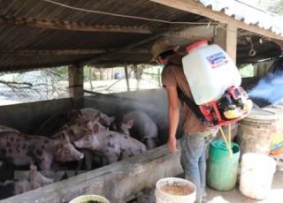 Tiết lộ 'vũ khí' mới trong phòng chống Dịch tả lợn châu Phi