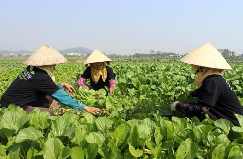 Những điều cần biết về bảo hiểm nông nghiệp