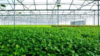 Xây dựng chính sách khuyến khích doanh nghiệp đầu tư vào tam nông