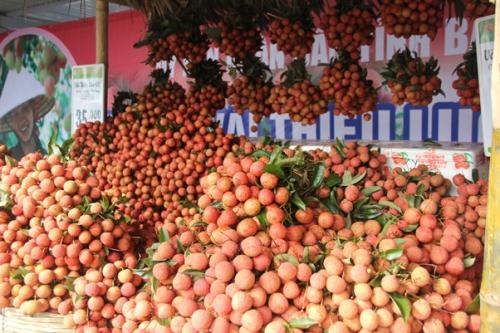 Bắc Giang đạt doanh thu hơn 5.700 tỷ đồng từ vụ vải 2018