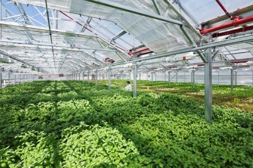 Nhiều chính sách hỗ trợ phát triển nông nghiệp hữu cơ
