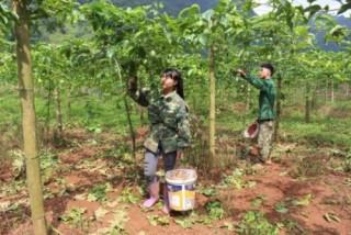 Dấu ấn tín dụng chính sách với hành trình giảm nghèo của Cao Bằng