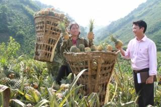 Sức sống mới trên vùng cao Lào Cai