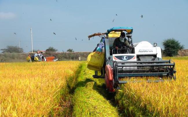 Yêu cầu các NHTM hỗ trợ doanh nghiệp thu muathóc, gạo khu vực ĐBSCL