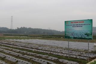 Vĩnh Phúc hỗ trợ kinh phí cho sản xuất cây vụ Đông 2018