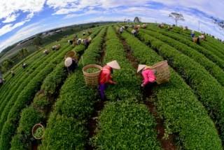 Phân phối lợi ích giữa người nông dân, doanh nghiệp và tổ chức thương mại