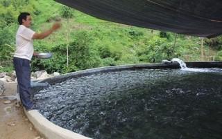 Quy hoạch phát triển: Bài toán khó cho nuôi cá nước lạnh ở Lào Cai