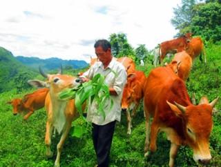 Nghệ An: Nông nghiệp đang tăng dần tỷ trọng chăn nuôi và dịch vụ