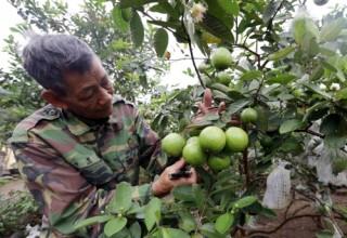 Thái Bình: Chất lượng tín dụng chính sách không ngừng được nâng lên