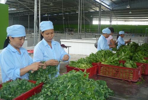 Hà Nội: Khuyến khích HTX tham gia xúc tiến thương mại