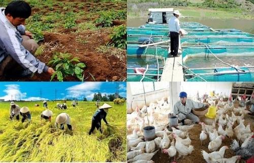 Hướng dẫn mới về cho vay phát triển nông nghiệp, nông thôn