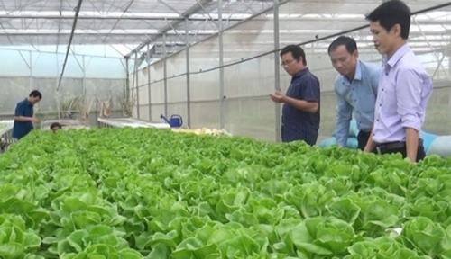 Hơn 17.000 khách hàng vay vốn sản xuất nông nghiệp sạch