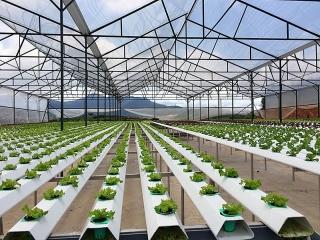 Ngân hàng ưu tiên nguồn vốn rẻ cho nông nghiệp công nghệ cao