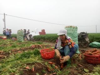 Gỡ ách tắc cho nông sản vùng dịch