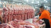 Giá lợn hơi đang có xu hướng giảm