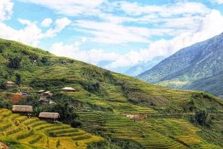 Tạo giá trị gia tăng để vị thế gạo Việt vươn cao