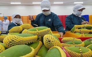 Nông phẩm Việt Nam: Cơ hội và thách thức từ sân chơi lớn