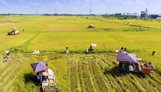 Rà soát kế hoạch sản xuất, tiêu thụ nông sản trong điều kiện dịch COVID-19