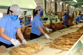 Hạn ngạch nhập khẩu thuốc lá nguyên liệu năm 2016 là 48.620 tấn