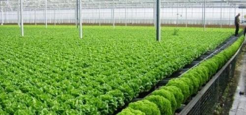 NHNN đã chỉ đạo tập trung vốn cho vay nông nghiệp CNC với lãi suất thấp