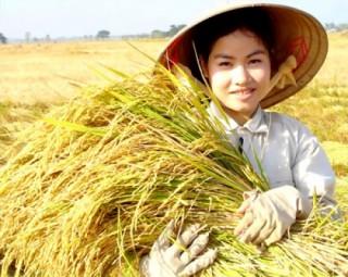 Giá lúa, gạo cơ bản ổn định trong suốt tháng 2