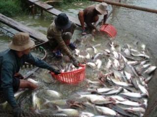 Sản lượng nuôi trồng và khai thác thủy sản tháng 2 ước đạt 523 nghìn tấn