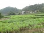 WB thông qua khoản tín dụng 100 triệu USD giúp Việt Nam giảm nghèo