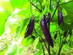 Thành công từ mô hình nông nghiệp hữu cơ