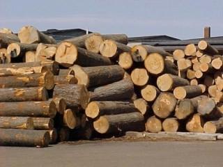 Dự kiến giảm thuế tài nguyên đối với một số nhóm gỗ