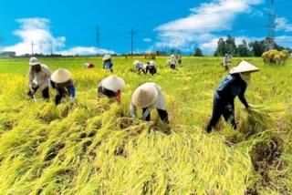 Đất chuyên trồng lúa nước được NSNN hỗ trợ 1 triệu đồng/ha/năm