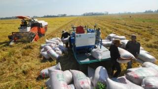 Không hỗ trợ lãi suất đối với các khoản vay tạm trữ lúa gạo quá hạn