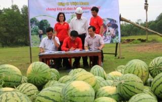 Big C Việt Nam chung tay vì dưa hấu Quảng Ngãi