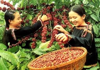 WB hỗ trợ 250 triệu USD chuyển đổi nông nghiệp bền vững