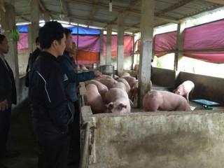 Các TCTD thực hiện cơ cấu lại nợ, miễn giảm lãi vay... cho ngành chăn nuôi lợn
