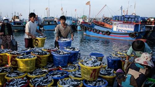 Bỏ quy hoạch cảng cá Cát Bà
