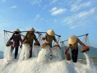 Ưu tiên mua tạm trữ muối tại địa phương có tồn đọng lớn